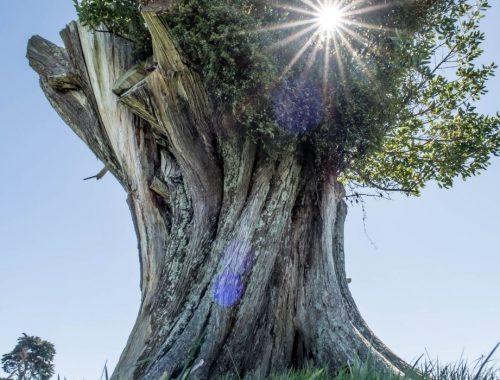 Symbolika w biżuterii - drzewo życia